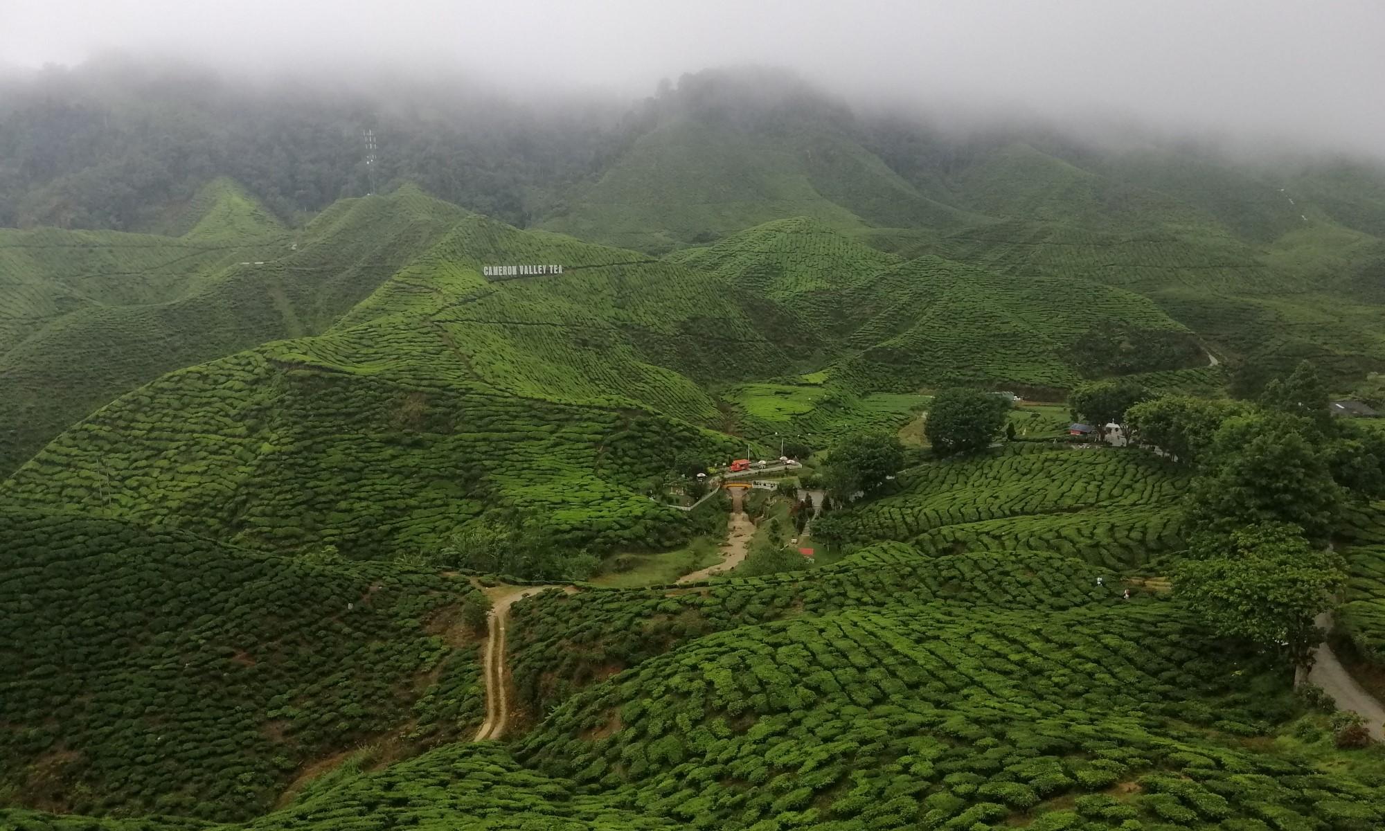 Камеронские нагорья | Экскурсии в Малайзии