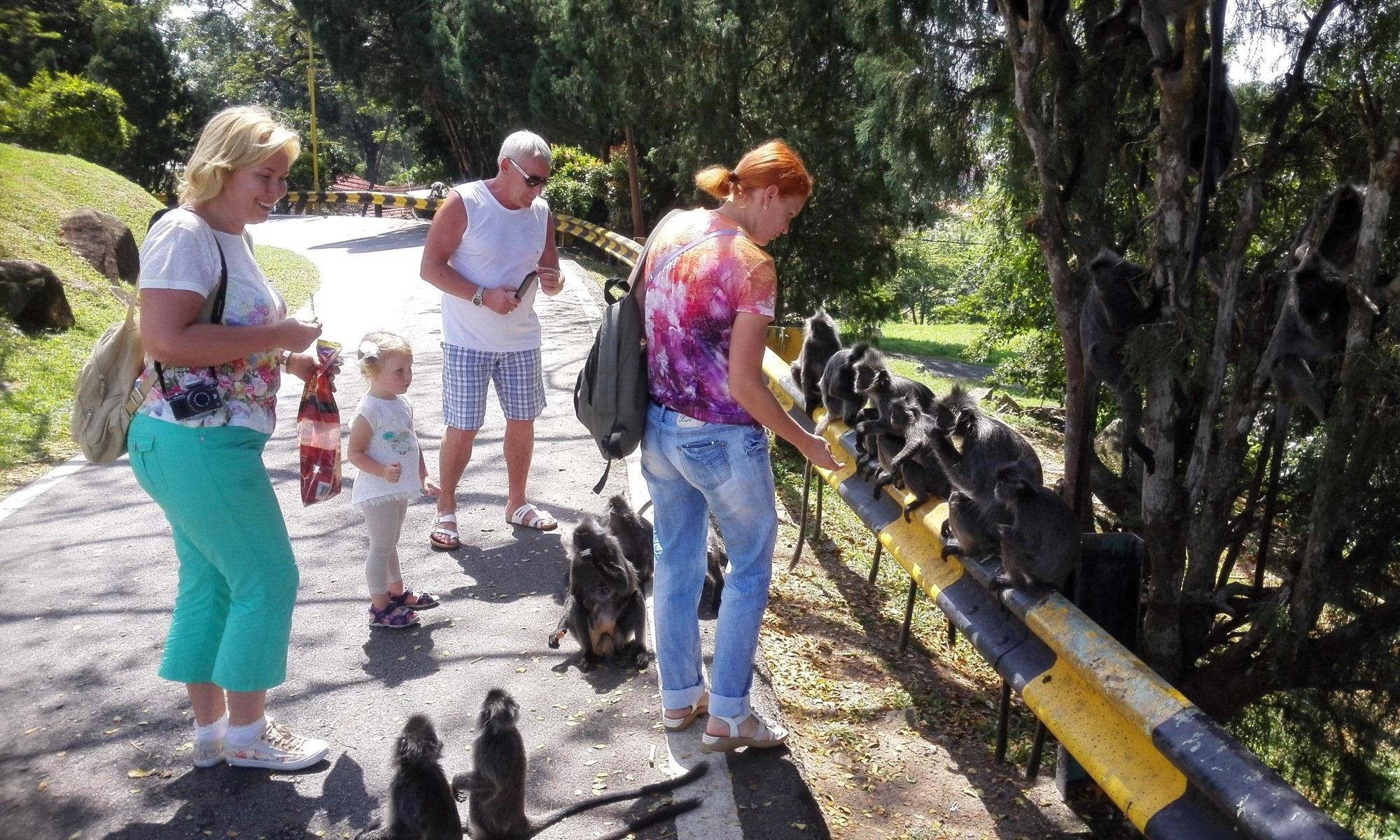 серебристые обезьянки лангуры | Экскурсии по окрестностям Куала-Лумпура